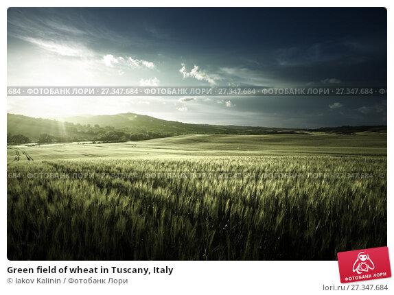 Купить «Green field of wheat in Tuscany, Italy», фото № 27347684, снято 20 мая 2017 г. (c) Iakov Kalinin / Фотобанк Лори