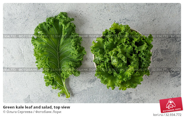 Купить «Green kale leaf and salad, top view», фото № 32934772, снято 2 августа 2019 г. (c) Ольга Сергеева / Фотобанк Лори