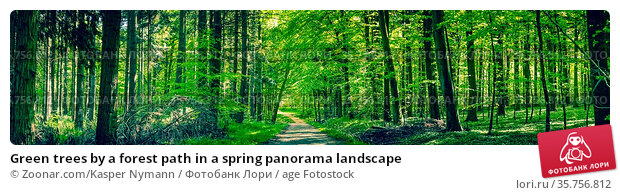 Green trees by a forest path in a spring panorama landscape. Стоковое фото, фотограф Zoonar.com/Kasper Nymann / age Fotostock / Фотобанк Лори