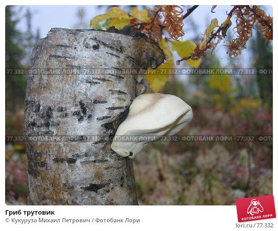 Гриб трутовик, фото № 77332, снято 28 августа 2005 г. (c) Кукуруза Михаил Петрович / Фотобанк Лори