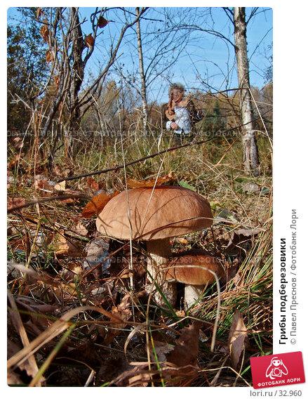 Грибы подберезовики, фото № 32960, снято 4 октября 2005 г. (c) Павел Преснов / Фотобанк Лори
