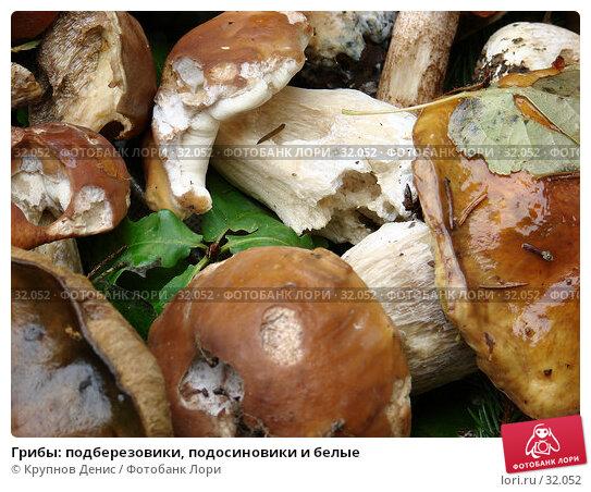 Грибы: подберезовики, подосиновики и белые, фото № 32052, снято 2 сентября 2006 г. (c) Крупнов Денис / Фотобанк Лори