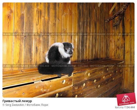 Купить «Гривастый лемур», фото № 134444, снято 10 октября 2004 г. (c) Serg Zastavkin / Фотобанк Лори