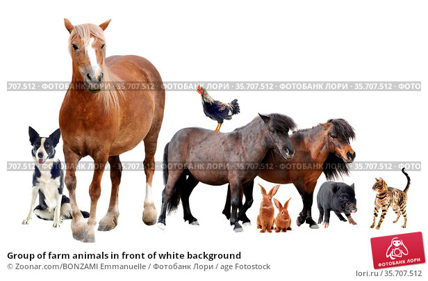 Group of farm animals in front of white background. Стоковое фото, фотограф Zoonar.com/BONZAMI Emmanuelle / age Fotostock / Фотобанк Лори