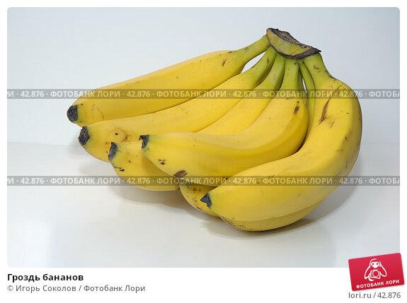 Гроздь бананов, фото № 42876, снято 25 февраля 2017 г. (c) Игорь Соколов / Фотобанк Лори