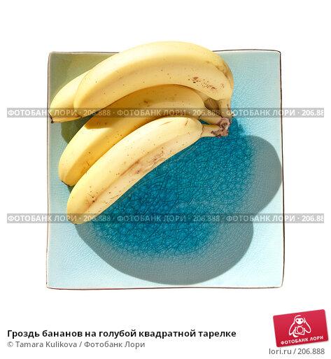 Гроздь бананов на голубой квадратной тарелке, фото № 206888, снято 17 февраля 2008 г. (c) Tamara Kulikova / Фотобанк Лори
