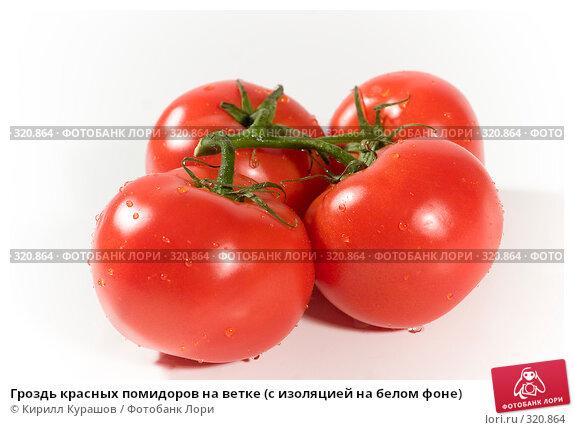 Гроздь красных помидоров на ветке (с изоляцией на белом фоне), фото № 320864, снято 10 июня 2008 г. (c) Кирилл Курашов / Фотобанк Лори