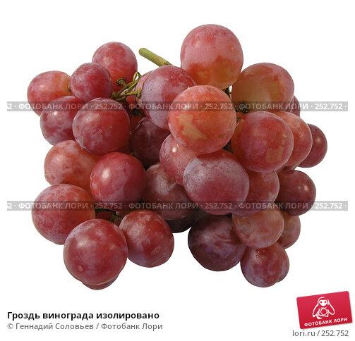 Гроздь винограда изолировано, фото № 252752, снято 13 апреля 2008 г. (c) Геннадий Соловьев / Фотобанк Лори