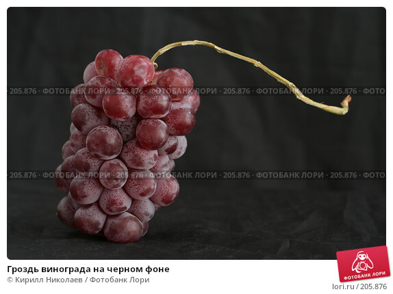 Гроздь винограда на черном фоне, фото № 205876, снято 22 апреля 2006 г. (c) Кирилл Николаев / Фотобанк Лори