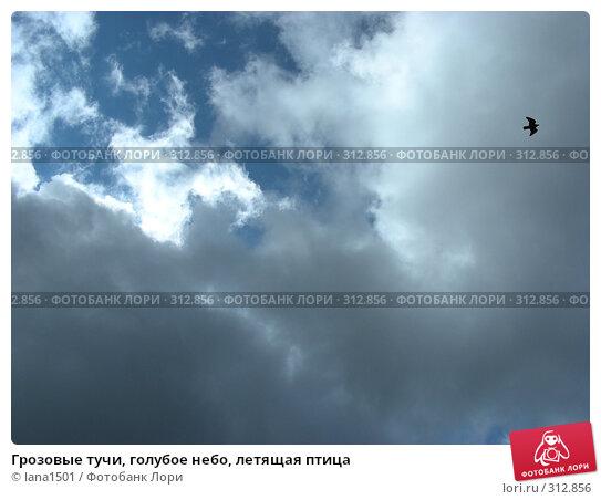 Грозовые тучи, голубое небо, летящая птица, эксклюзивное фото № 312856, снято 4 июня 2008 г. (c) lana1501 / Фотобанк Лори