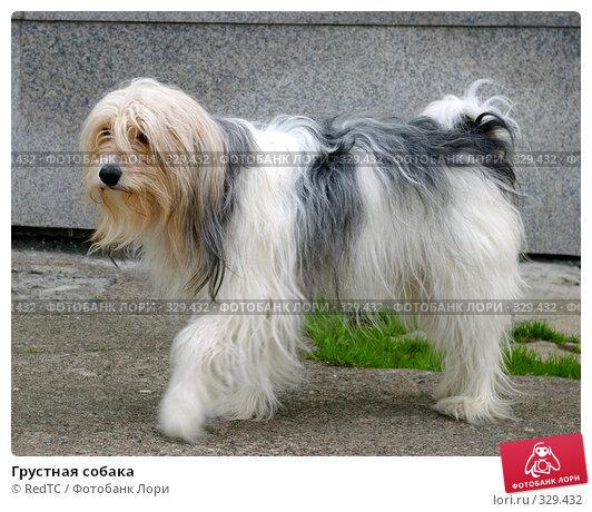Купить «Грустная собака», фото № 329432, снято 19 июня 2008 г. (c) RedTC / Фотобанк Лори
