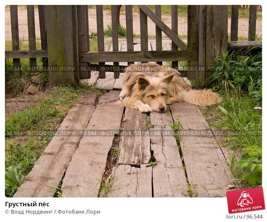 Грустный пёс, фото № 96544, снято 22 января 2017 г. (c) Влад Нордвинг / Фотобанк Лори