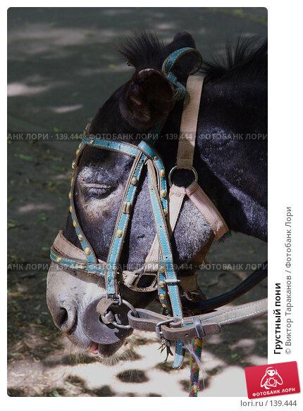 Грустный пони, эксклюзивное фото № 139444, снято 6 декабря 2016 г. (c) Виктор Тараканов / Фотобанк Лори