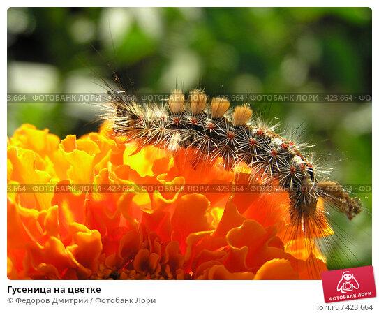 Гусеница на цветке. Стоковое фото, фотограф Фёдоров Дмитрий / Фотобанк Лори