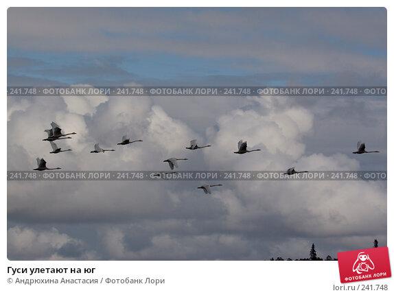 Гуси улетают на юг, фото № 241748, снято 16 сентября 2007 г. (c) Андрюхина Анастасия / Фотобанк Лори