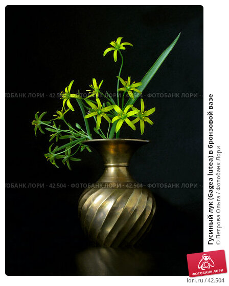 Гусиный лук (Gagea lutea) в бронзовой вазе, фото № 42504, снято 7 апреля 2007 г. (c) Петрова Ольга / Фотобанк Лори