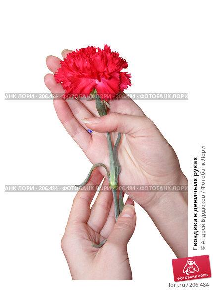 Гвоздика в девичьих руках, фото № 206484, снято 13 февраля 2008 г. (c) Андрей Бурдюков / Фотобанк Лори