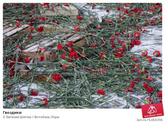 Гвоздики. Стоковое фото, фотограф Евгения Шитюк / Фотобанк Лори