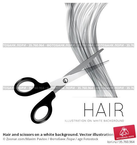 Hair and scissors on a white background. Vector illustration. Стоковое фото, фотограф Zoonar.com/Maxim Pavlov / age Fotostock / Фотобанк Лори