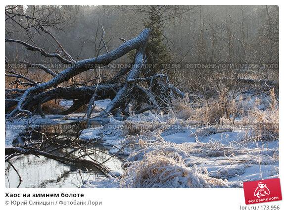 Хаос на зимнем болоте, фото № 173956, снято 8 января 2008 г. (c) Юрий Синицын / Фотобанк Лори