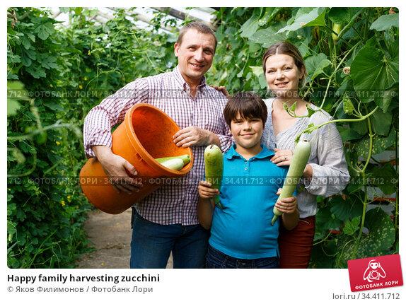 Happy family harvesting zucchini. Стоковое фото, фотограф Яков Филимонов / Фотобанк Лори