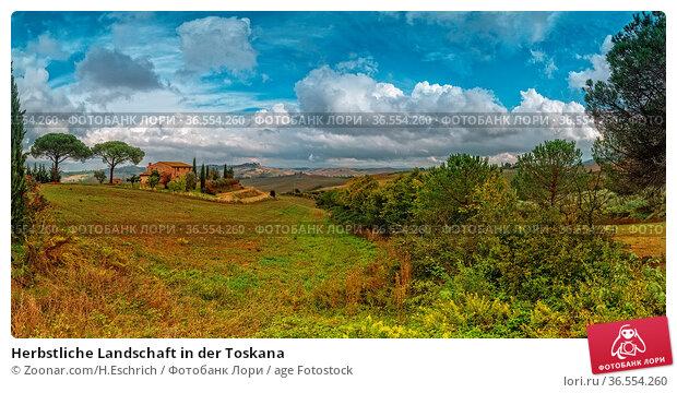 Herbstliche Landschaft in der Toskana. Стоковое фото, фотограф Zoonar.com/H.Eschrich / age Fotostock / Фотобанк Лори