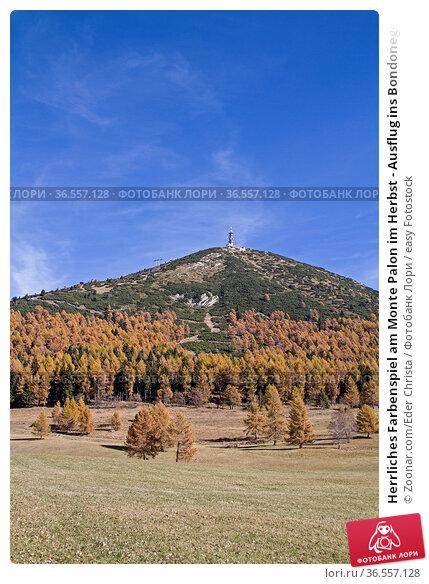 Herrliches Farbenspiel am Monte Palon im Herbst - Ausflug ins Bondonegebirge... Стоковое фото, фотограф Zoonar.com/Eder Christa / easy Fotostock / Фотобанк Лори
