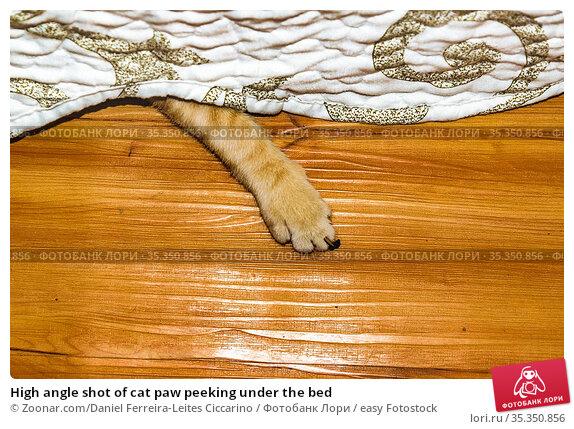 High angle shot of cat paw peeking under the bed. Стоковое фото, фотограф Zoonar.com/Daniel Ferreira-Leites Ciccarino / easy Fotostock / Фотобанк Лори