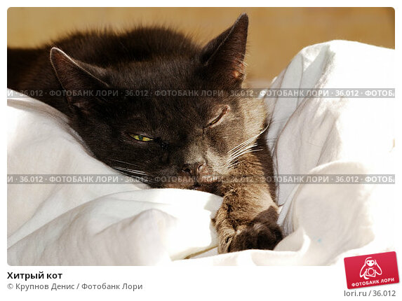Хитрый кот, фото № 36012, снято 26 марта 2007 г. (c) Крупнов Денис / Фотобанк Лори