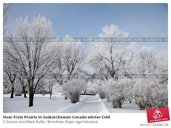 Купить «Hoar Frost Prairie in Saskatchewan Canada winter Cold», фото № 33438116, снято 10 апреля 2020 г. (c) age Fotostock / Фотобанк Лори