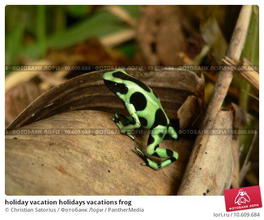 holiday vacation holidays vacations frog. Стоковое фото, фотограф Christian Satorius / PantherMedia / Фотобанк Лори