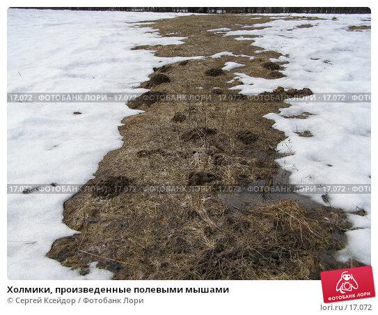 Холмики, произведенные полевыми мышами, фото № 17072, снято 15 апреля 2006 г. (c) Сергей Ксейдор / Фотобанк Лори