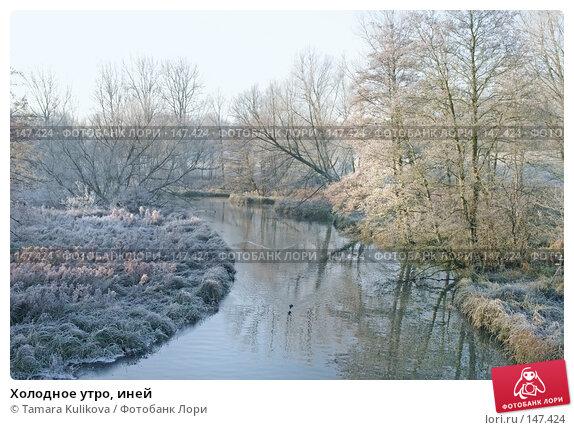 Холодное утро, иней, фото № 147424, снято 13 декабря 2007 г. (c) Tamara Kulikova / Фотобанк Лори