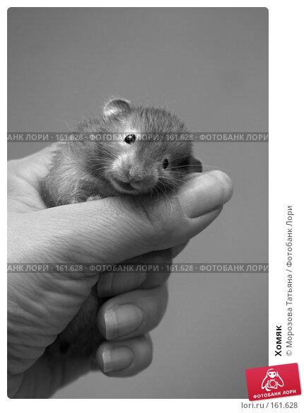 Хомяк, фото № 161628, снято 21 апреля 2006 г. (c) Морозова Татьяна / Фотобанк Лори