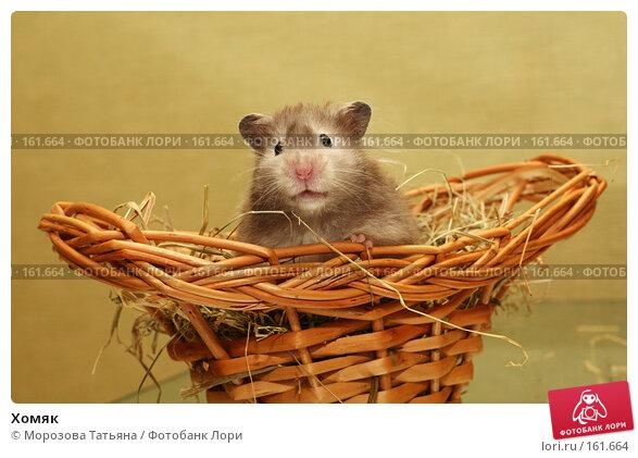 Хомяк, фото № 161664, снято 6 марта 2007 г. (c) Морозова Татьяна / Фотобанк Лори