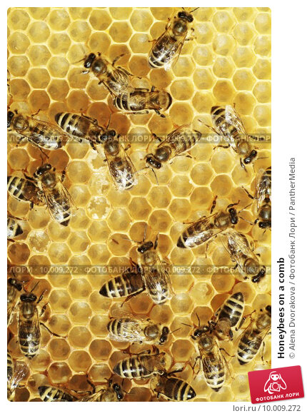 bee farming business plan