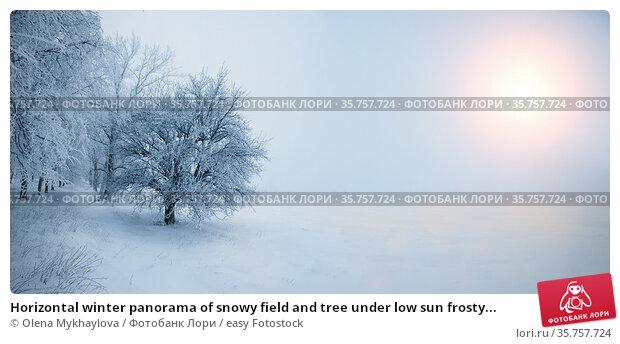 Horizontal winter panorama of snowy field and tree under low sun frosty... Стоковое фото, фотограф Olena Mykhaylova / easy Fotostock / Фотобанк Лори