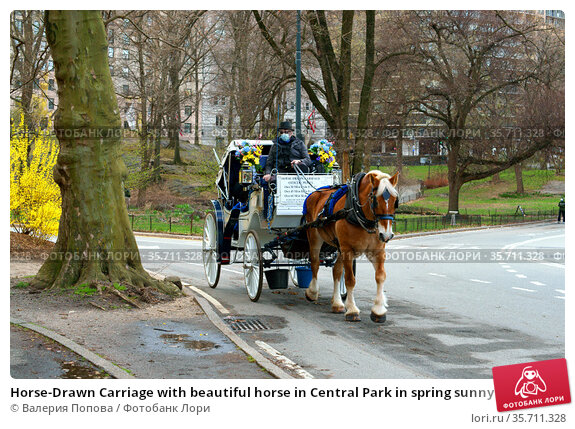 Horse-Drawn Carriage with beautiful horse in Central Park in spring sunny day. Редакционное фото, фотограф Валерия Попова / Фотобанк Лори