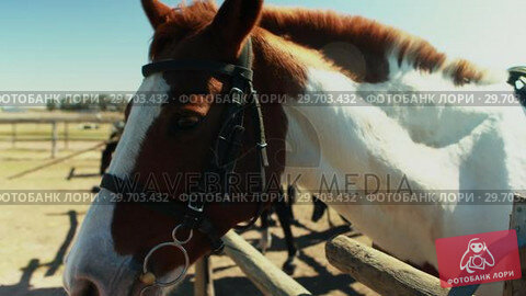 Horse standing in the ranch on a sunny day 4k. Стоковое видео, агентство Wavebreak Media / Фотобанк Лори
