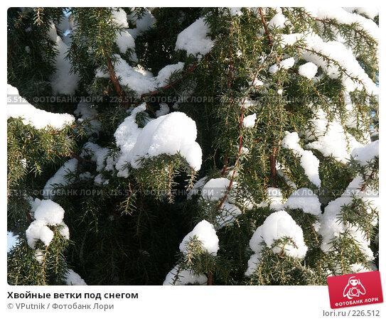 Хвойные ветки под снегом, фото № 226512, снято 8 февраля 2007 г. (c) VPutnik / Фотобанк Лори