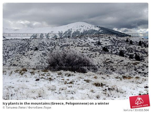 Купить «Icy plants in the mountains (Greece, Peloponnese) on a winter», фото № 33033504, снято 24 декабря 2019 г. (c) Татьяна Ляпи / Фотобанк Лори