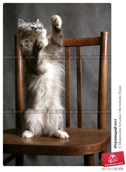 Играющий кот, фото № 68496, снято 21 июля 2007 г. (c) Морозова Татьяна / Фотобанк Лори