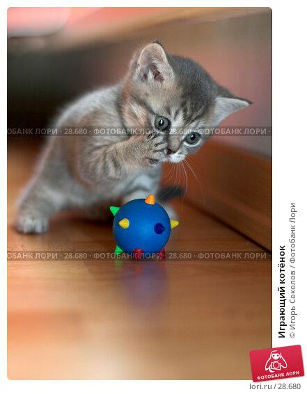 Играющий котёнок, фото № 28680, снято 13 мая 2006 г. (c) Игорь Соколов / Фотобанк Лори