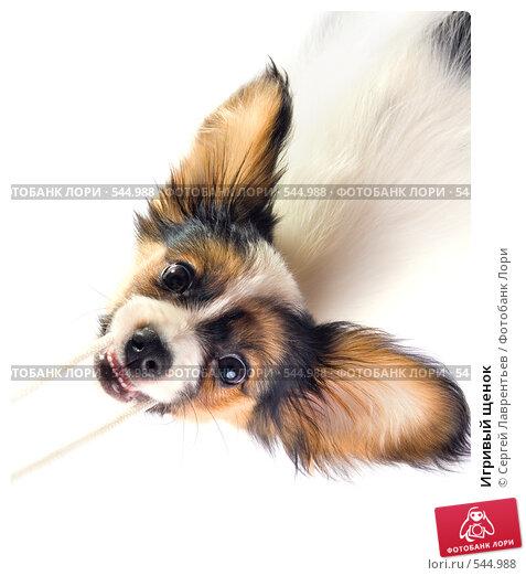 Купить «Игривый щенок», фото № 544988, снято 5 ноября 2008 г. (c) Сергей Лаврентьев / Фотобанк Лори