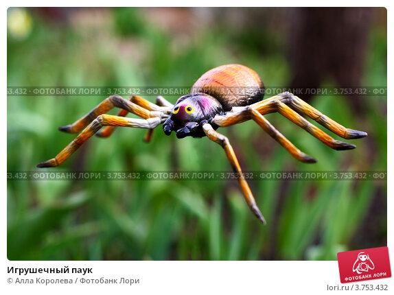 Игрушечный паук. Стоковое фото, фотограф Алла Королева / Фотобанк Лори