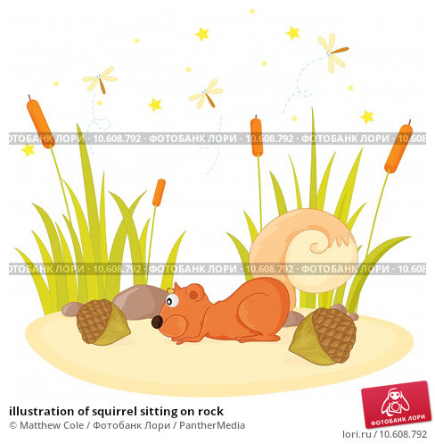 illustration of squirrel sitting on rock. Стоковая иллюстрация, иллюстратор Matthew Cole / PantherMedia / Фотобанк Лори