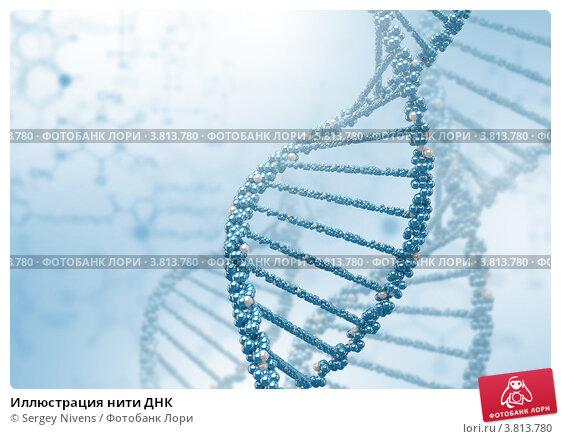 Купить «Иллюстрация нити ДНК», иллюстрация № 3813780 (c) Sergey Nivens / Фотобанк Лори