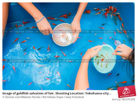 Image of goldfish salvation of fair. Shooting Location: Yokohama-city... Стоковое фото, фотограф Zoonar.com/Makoto Honda / easy Fotostock / Фотобанк Лори