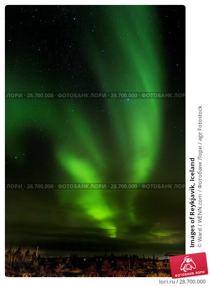 Купить «Images of Reykjavik, Iceland Featuring: Northern Lights, Iceland Where: Reykyavik, Iceland When: 26 Oct 2016 Credit: Ward/WENN.com», фото № 28700000, снято 26 октября 2016 г. (c) age Fotostock / Фотобанк Лори