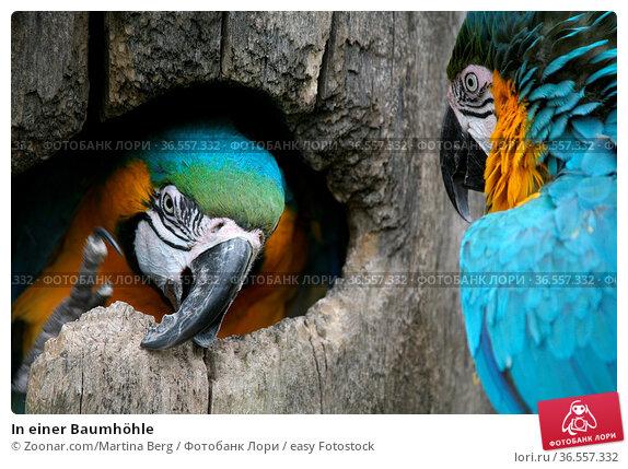 In einer Baumhöhle. Стоковое фото, фотограф Zoonar.com/Martina Berg / easy Fotostock / Фотобанк Лори